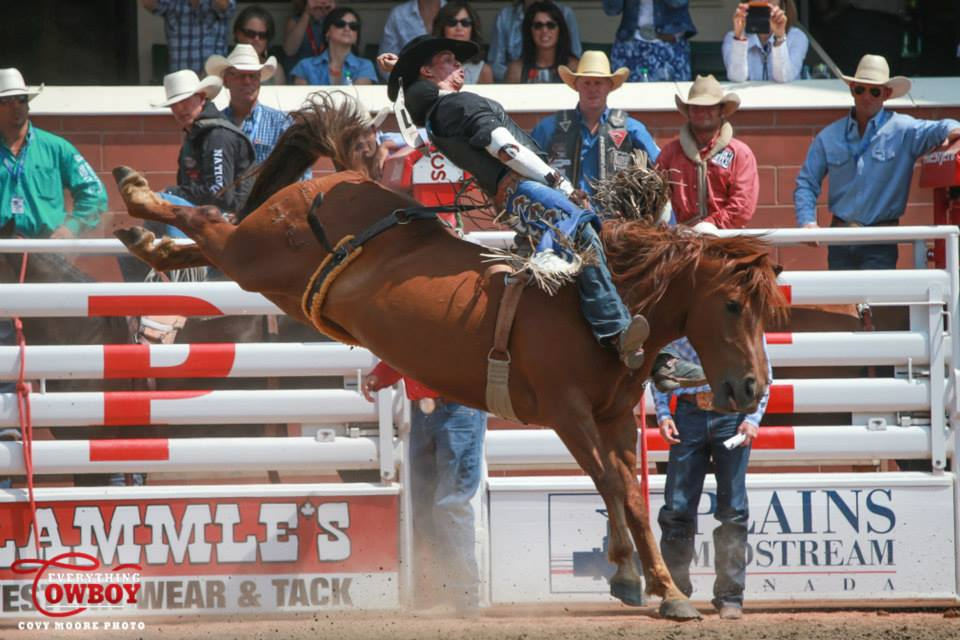 Orin Larsen rides Wayne Vold's Dancing queen to an 88 point score and the win on Day 8 of the Calgary Stampede on July 10th, 2015. Photo by Covy Moore.